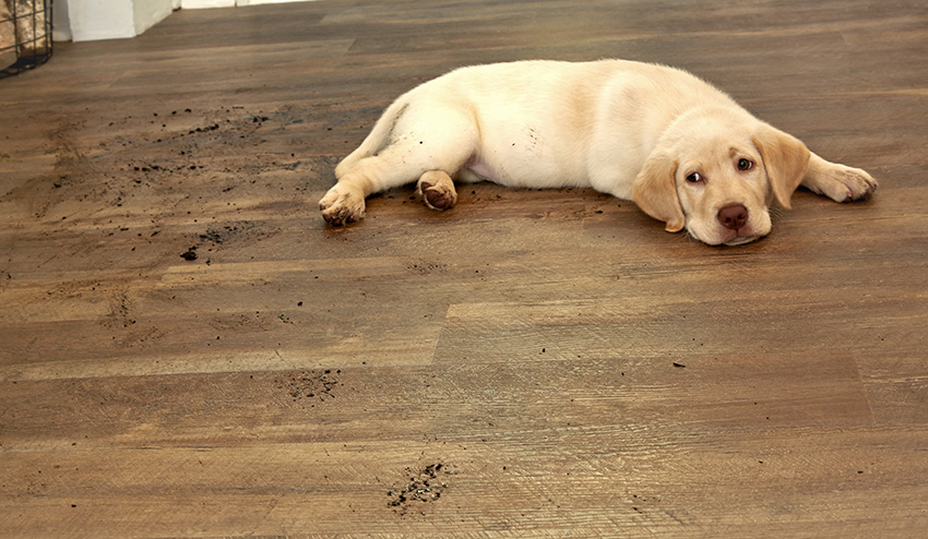 Wood-look Tile Or Real Wood – Expanded Flooring Choices